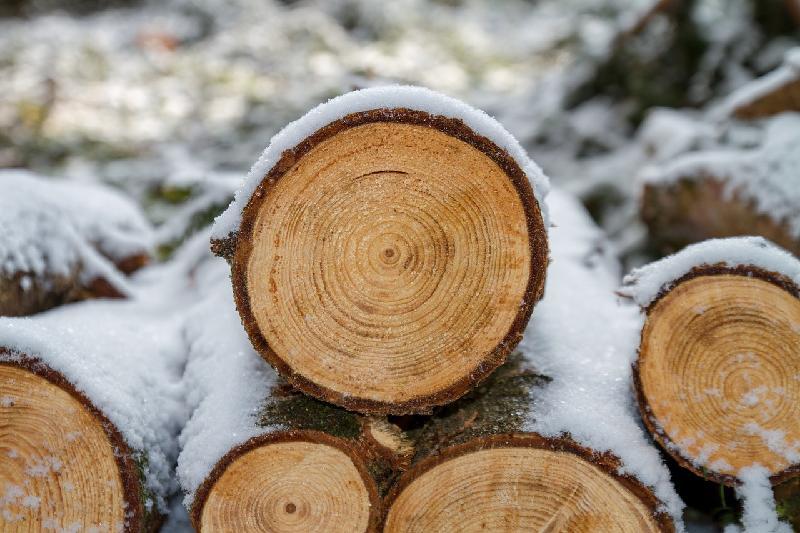 Деревья вырубят в Бутаковском ущелье Алматы