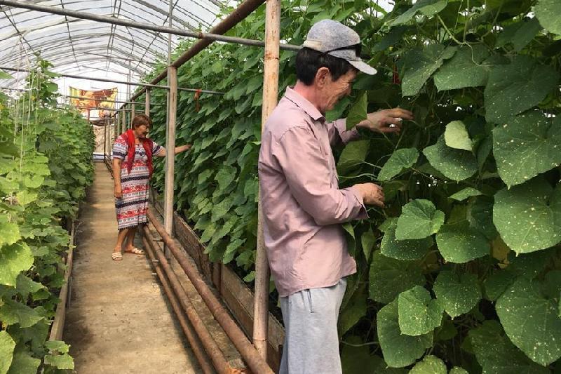 130 сельхозпроектов по программе «Бастау» профинансировали в Атырауской области