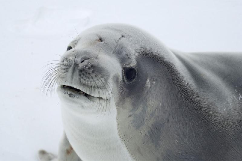Iran has national action plant to protect Caspian Sea seals