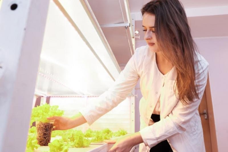 Сельчанка выращивает полезную зелень для малообеспеченных семей и пенсионеров