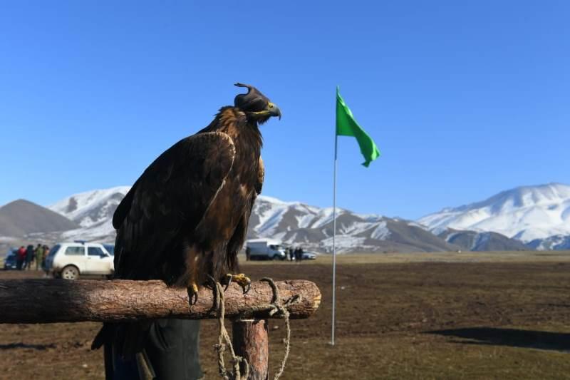 Фестиваль охотников с беркутами и борзыми начался в Туркестанской области