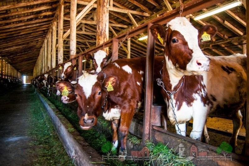 Как в Костанае реализуют проект «Умная молочная ферма»