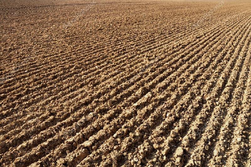 Площадь сельхозземель в Туркестанской области увеличилась на 16,3 тыс. га