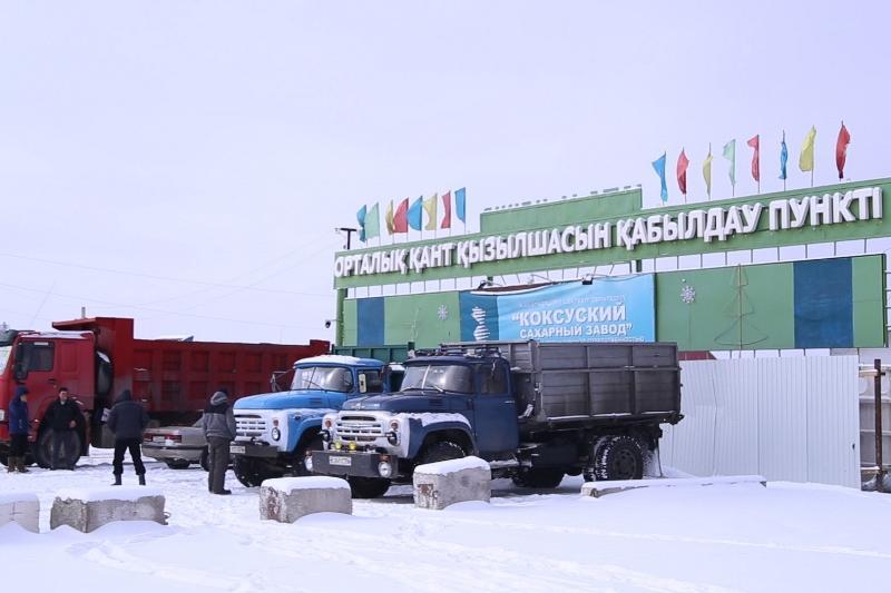 Алматы облысында қант қызылшасын өсірген шаруалар ақшаларын ала алмай жүр