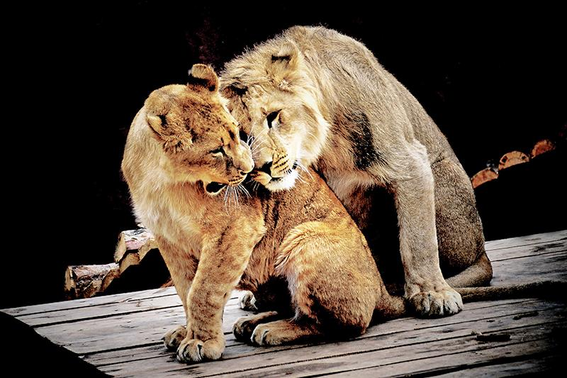 Как животные Алматинского зоопарка проявляют нежные чувства друг другу