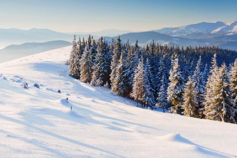 Площадь лесов увеличивается в Северном Казахстане