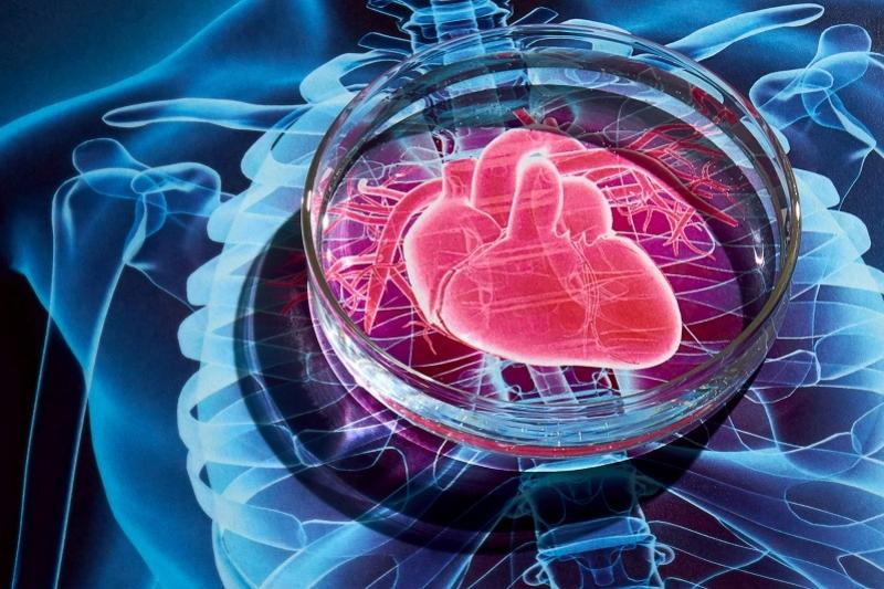 Scientists identify molecular mechanism of how sleep protects against heart disease