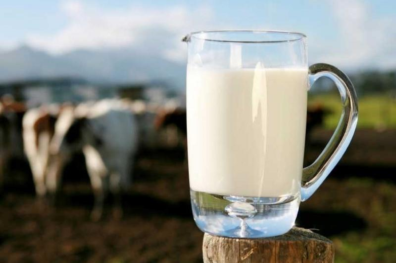 Сколько можно заработать на реализации молока, рассказал аким СКО