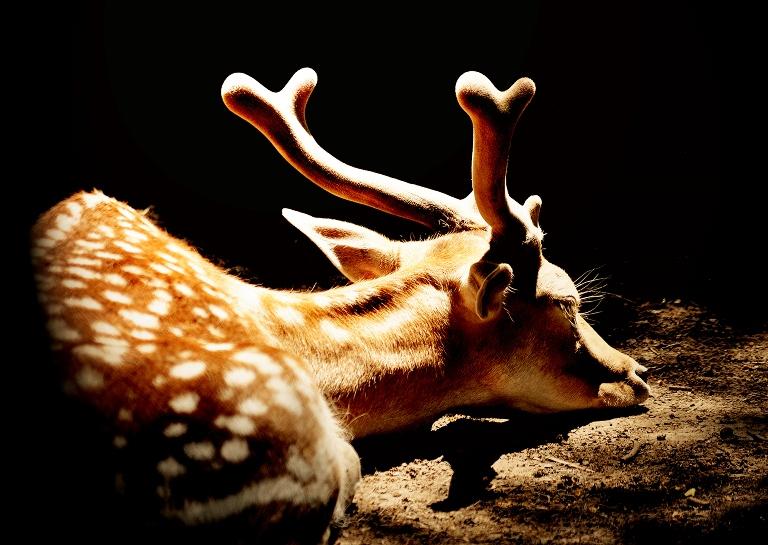 Всемирный день сна: как проходит «тихий час» в алматинском зоопарке