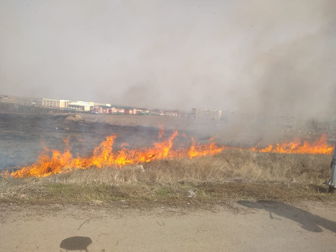 В Алматы участились случаи горения сухостоя