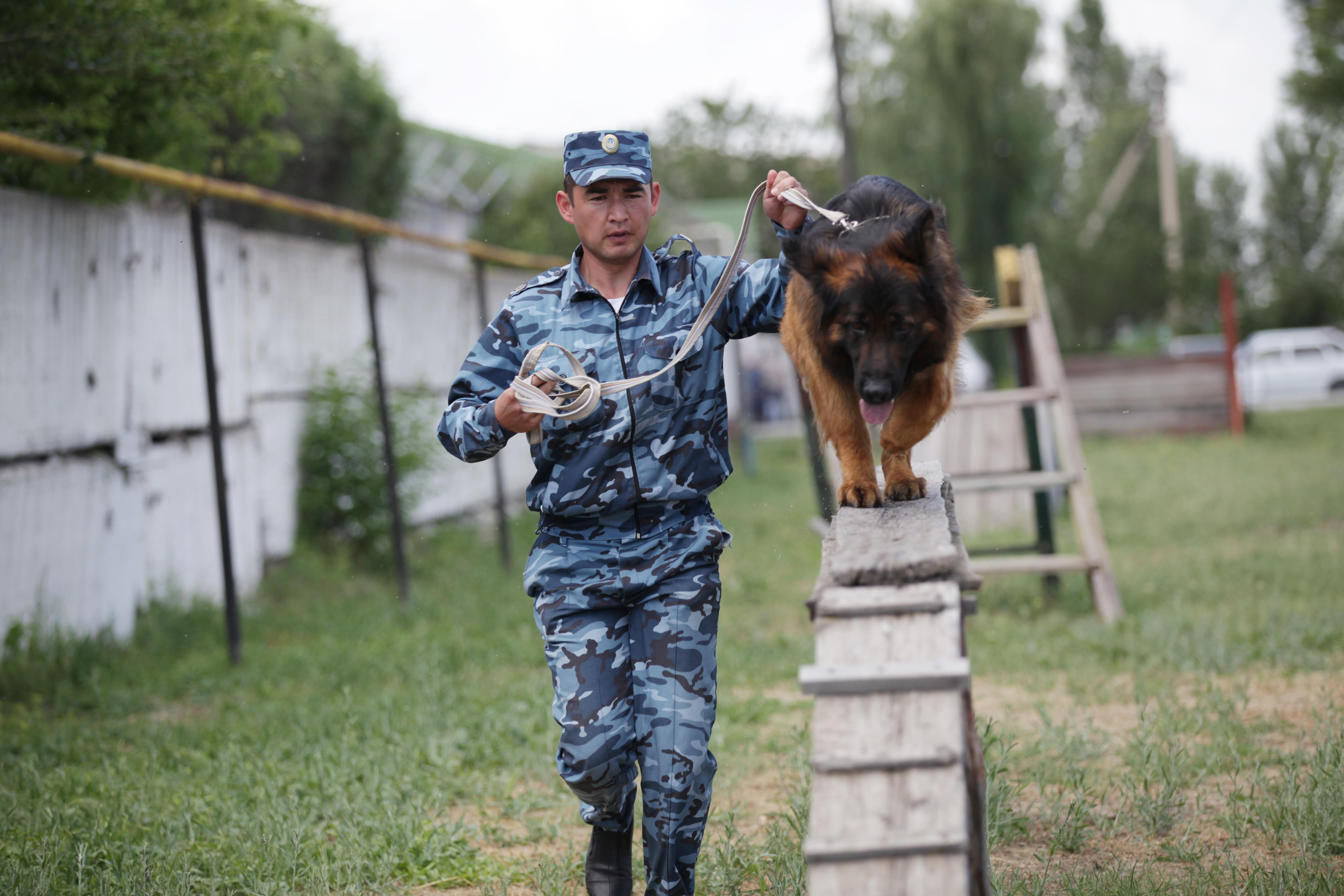 Собачья служба, или Как работают жамбылские кинологи