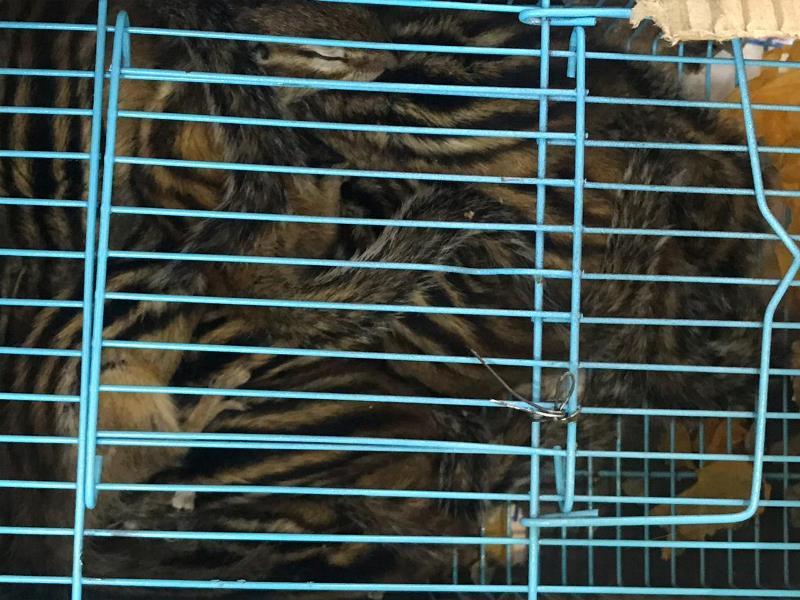Тритонов, редких птиц и крабов пытались контрабандой ввезти в Казахстан из Китая
