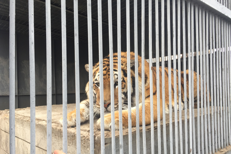 Редкими животными пополнился карагандинский зоопарк