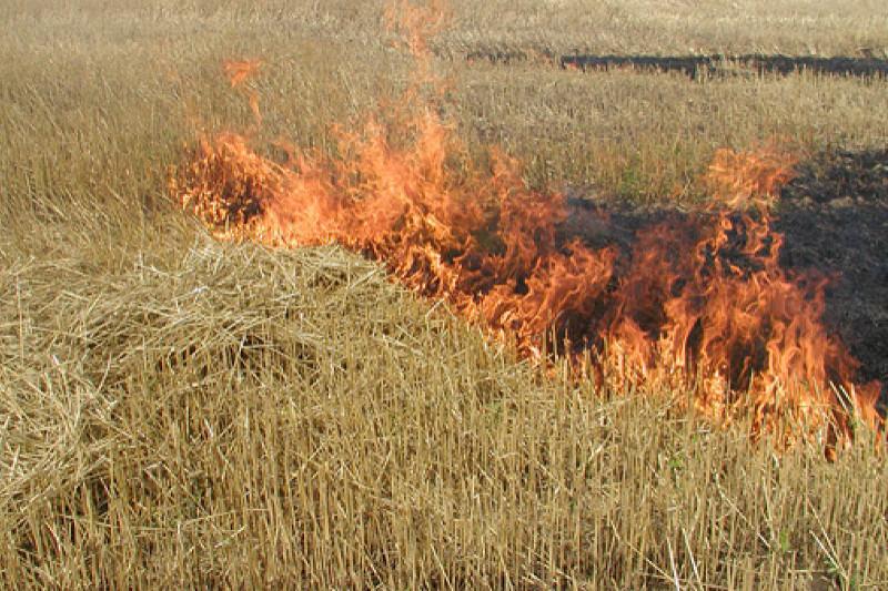 Наказывать за бесконтрольное сжигание стерни поручил аким СКО