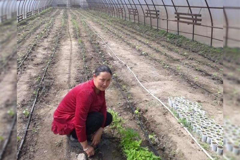 Многодетная женщина из Алматинской области открыла теплицу