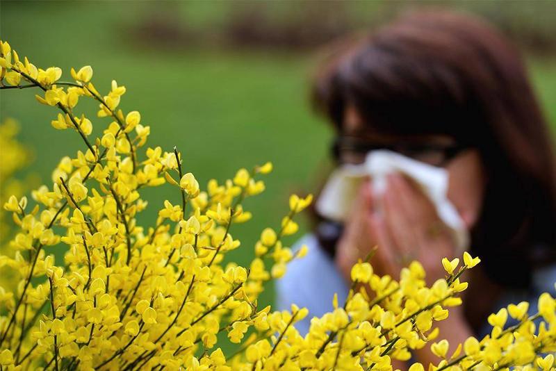 Аллергияны емдемесе демікпеге ұласады - маман