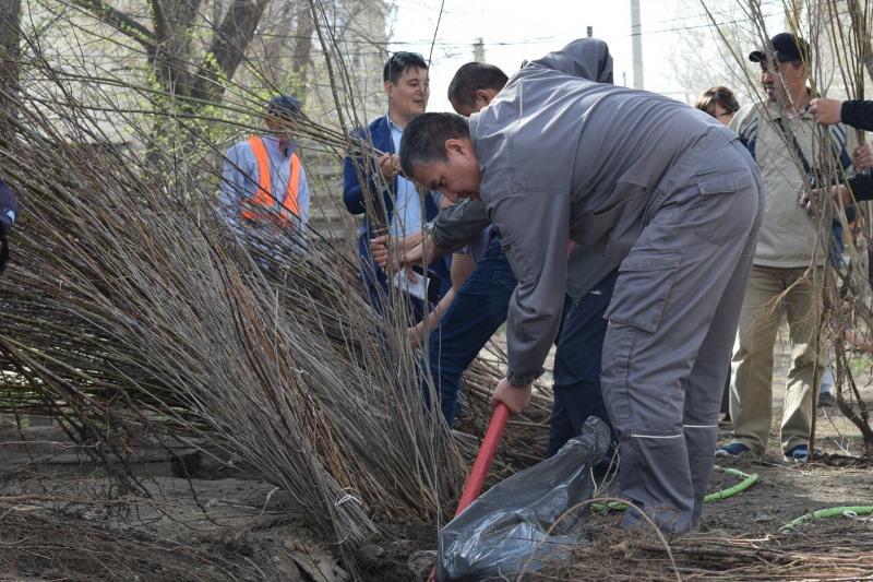 3 тысячи саженцев раздали жителям Атырау