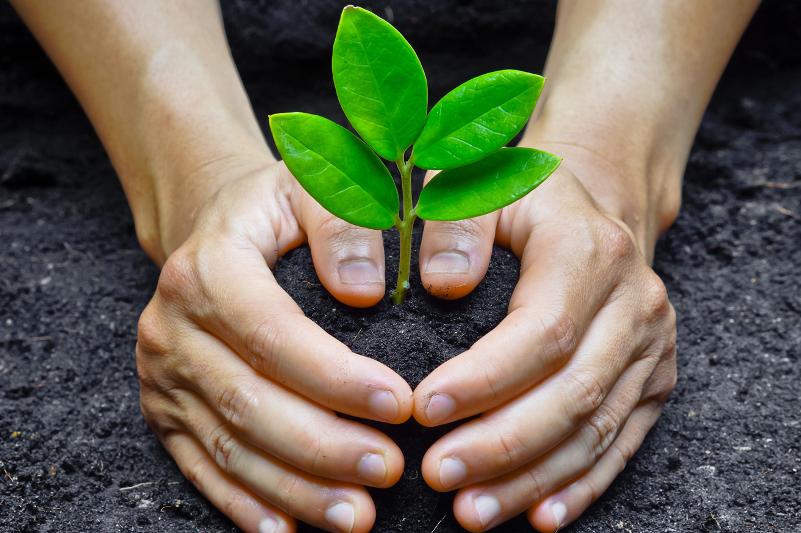 Спецслужбу для озеленения города создали в Петропавловске