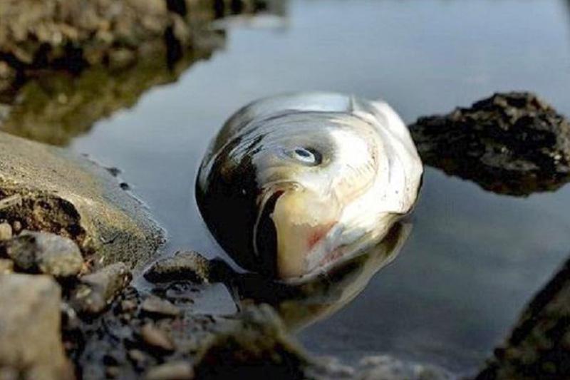 Рыба погибла на озере в Северном Казахстане