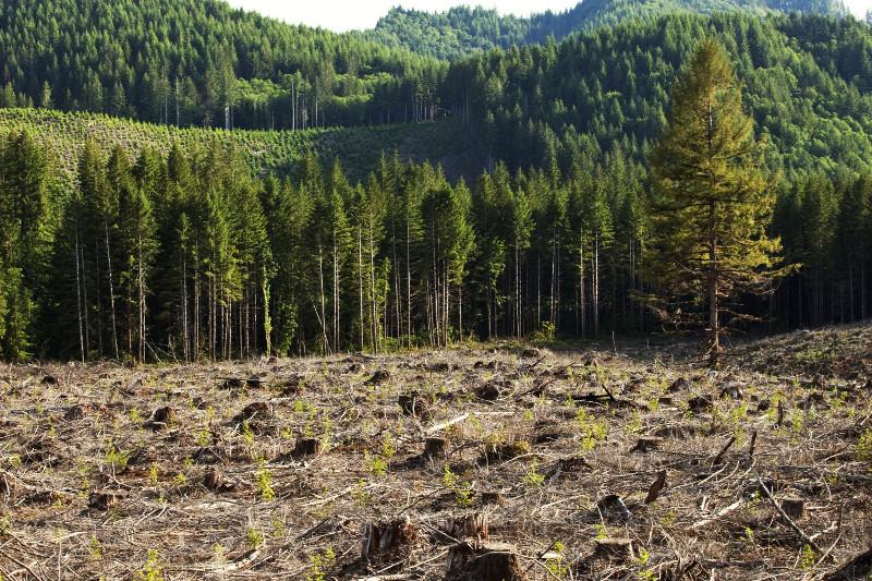 去年全球共有1200万公顷森林消失