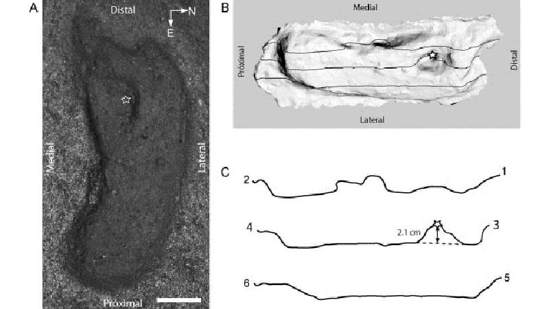 美洲发现1.5万年前人类脚印