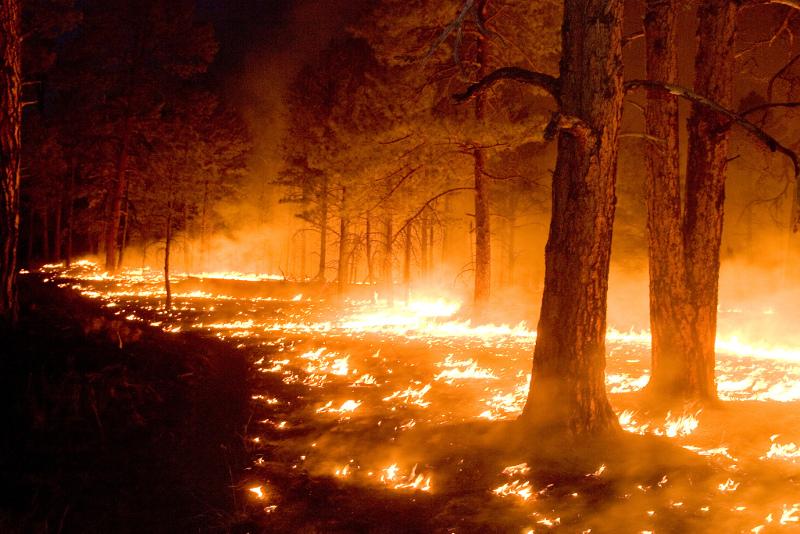 Пять лесных пожаров зафиксировали в СКО