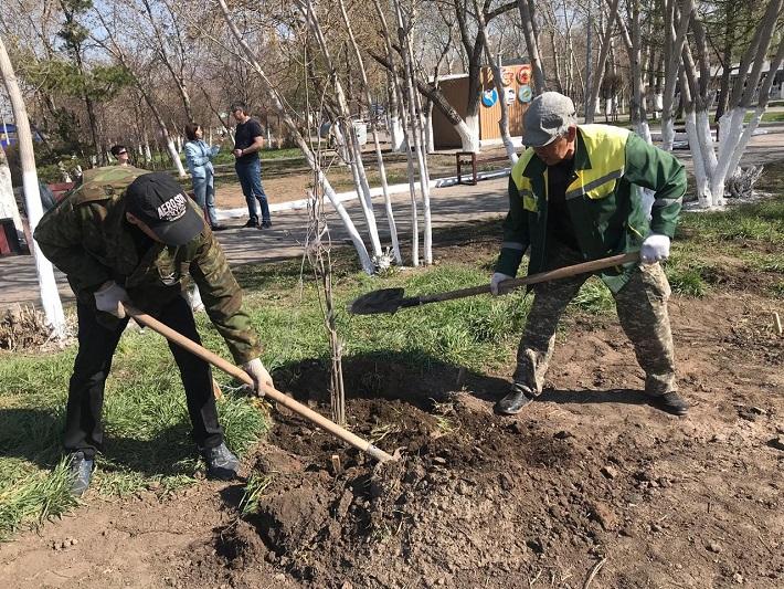 150 саженцев лиственных деревьев высадили в Караганде