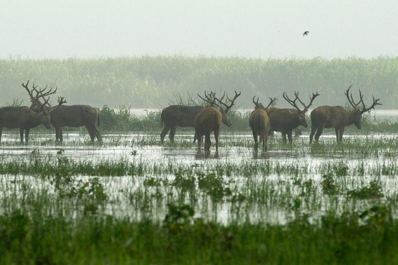 联合国科学组织:全球100万物种濒临灭绝