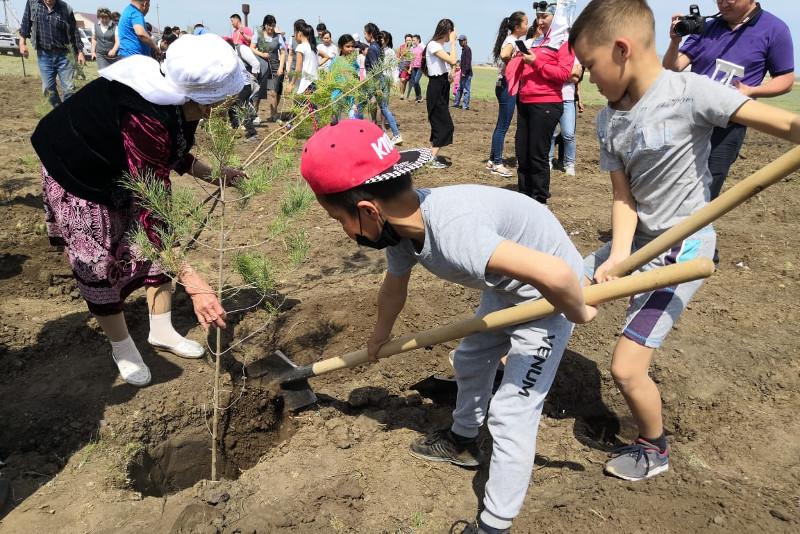 800 саженцев сосны посадили в День Победы потомки актюбинских ветеранов