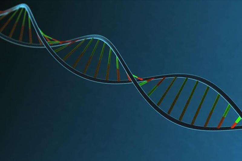 Turkish scientists convert DNA into music, animation