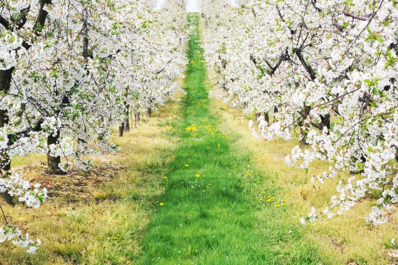 Международная компания инвестирует в создание фруктовых садов в Казахстане