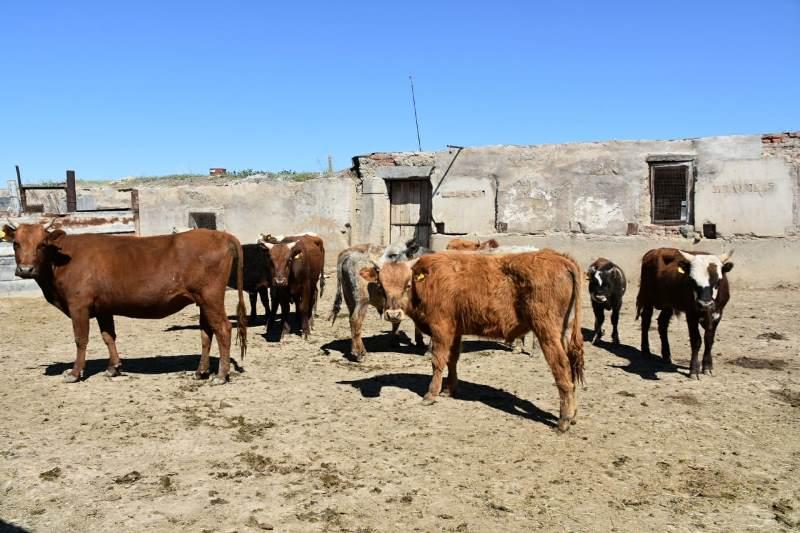 Кражи более 40 лошадей и коров раскрыли в Карагандинской области