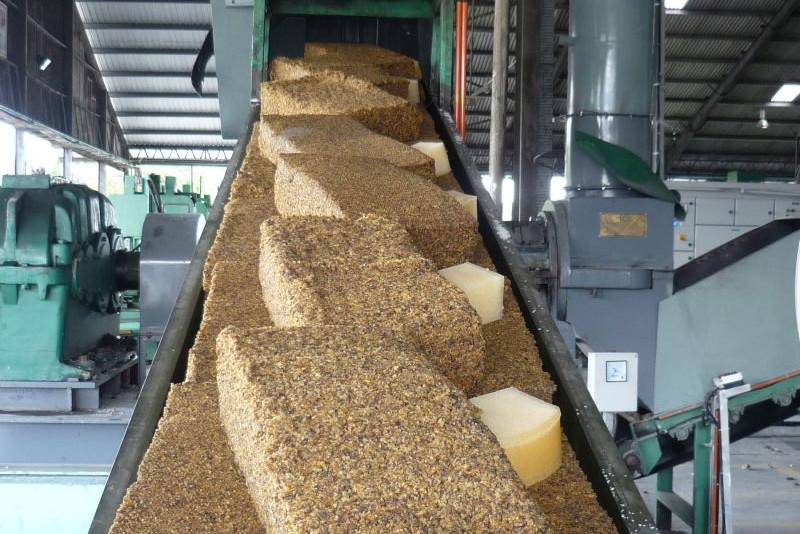 Завод по производству каучука из одуванчика «көксағыз» построят в Алматинской области