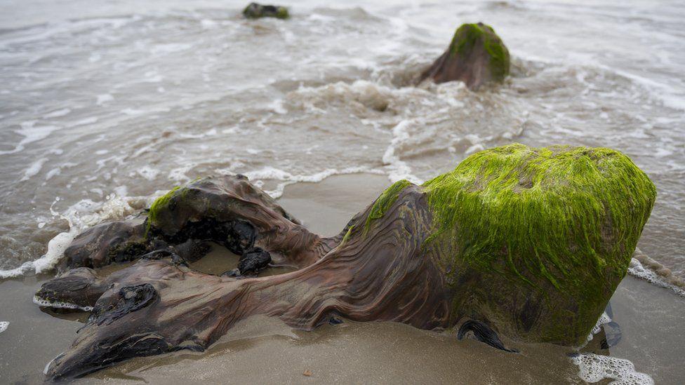«Ханна» дауылы құм астында тасқа айналған орманды ашты