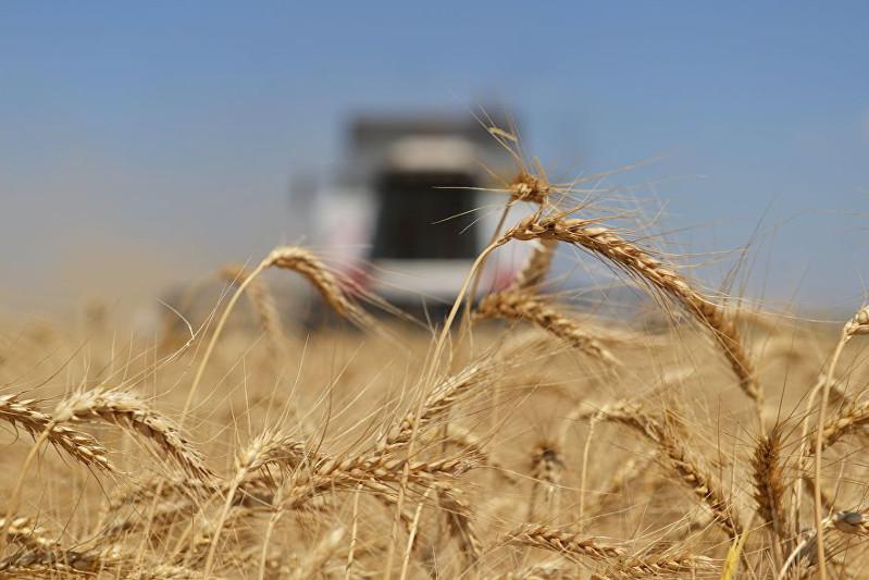 Проект выпускника Назарбаев Университет поможет поднять урожайность на 40% - Елбасы