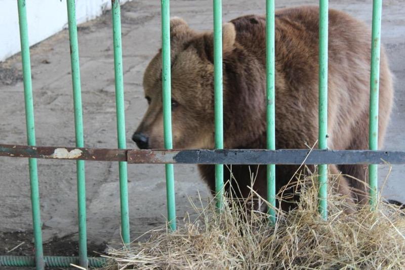 在监狱中待了15年后 这头棕熊终于
