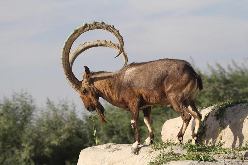 禁猎措施出成效 东哈州野生动物种群数量显著回升