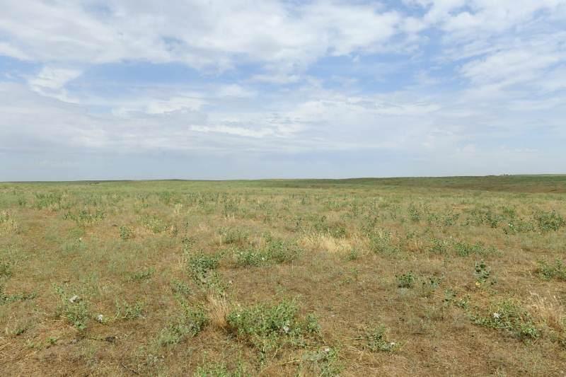 Келесте құны 1,1 млрд доллар болатын еліміздегі ең ірі жылыжай салынады