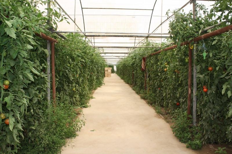 Площадь теплиц увеличат в Туркестанской области