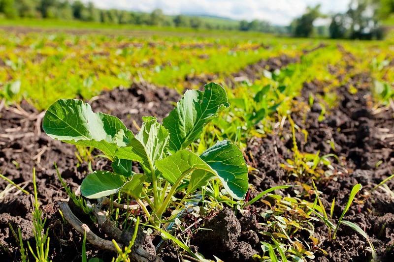 Түркістан облысында 80 мың гектарға жуық суармалы жер ағын сумен қамтылады
