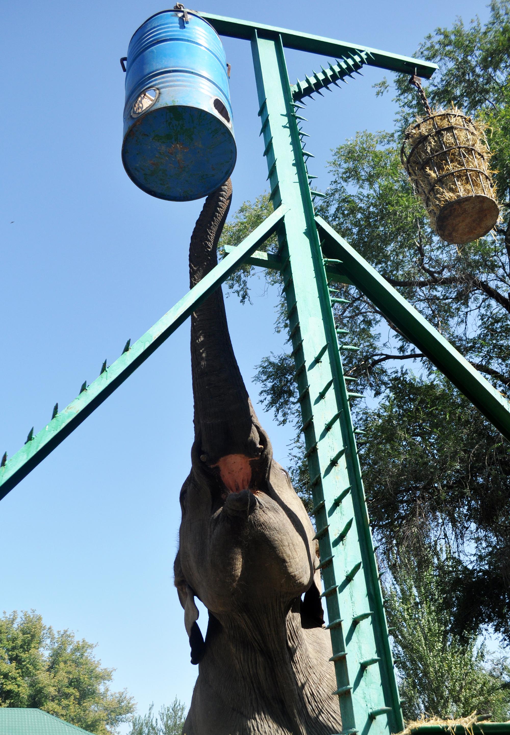 В Алматинском зоопарке отмечают всемирный день защиты слонов