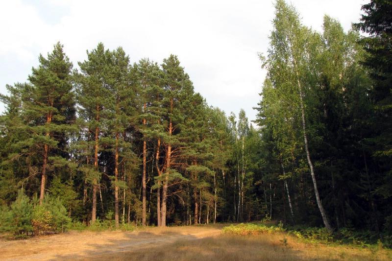 报告:亚太地区原始森林覆盖率和人均森林面积全球最低