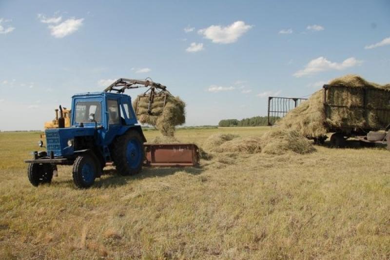 Передать сенокосы и пастбища сельским сообществам просят депутаты