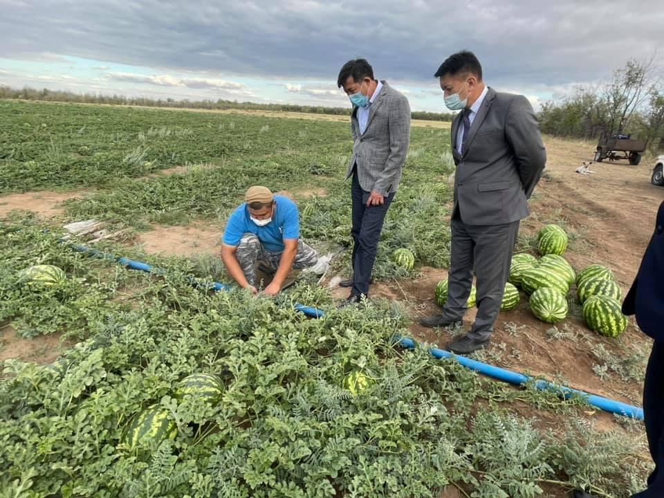 Арбузами обеспечивает местных жителей бахчевод из Карагандинской области
