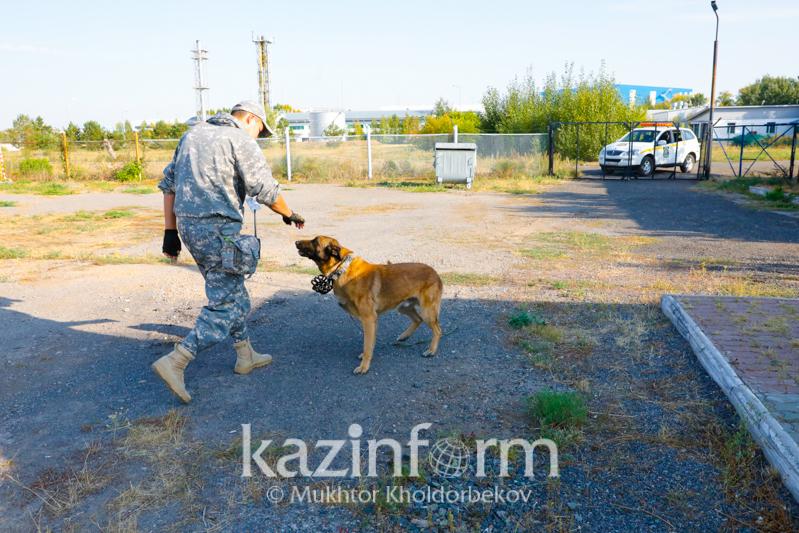 Сангвиники и холерики: какие собаки обеспечивают безопасность пассажиров в аэропорту