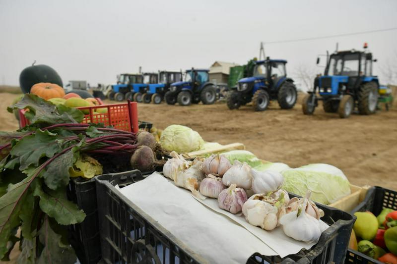 Аким Туркестанской области: Диверсификация сельского хозяйства - главное условие конкуренции8