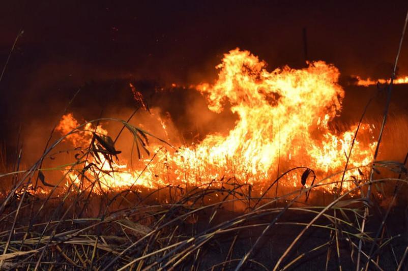 На зерновых полях в Жамбылской области полыхают пожары