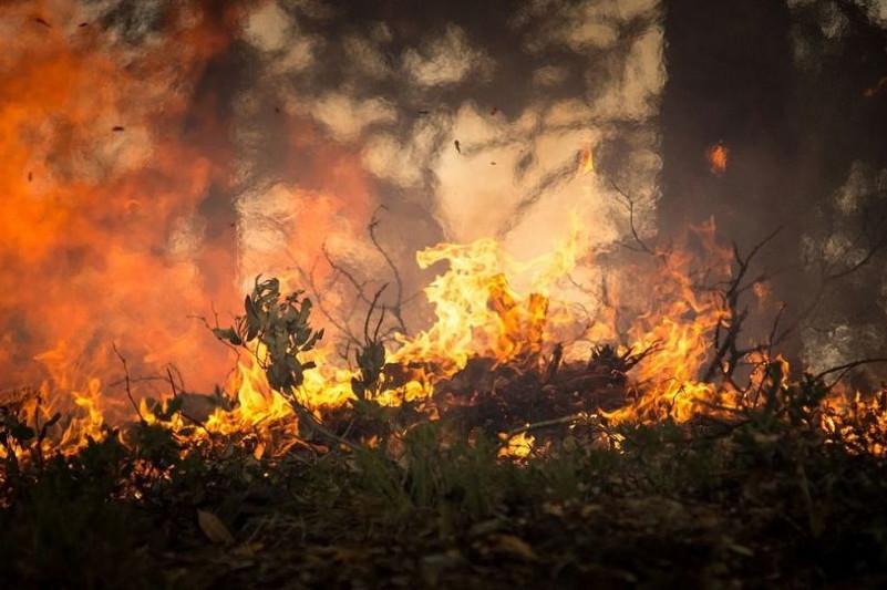 Павлодар ормандарына өрт қаупі төніп тұр – Владимир Беккер