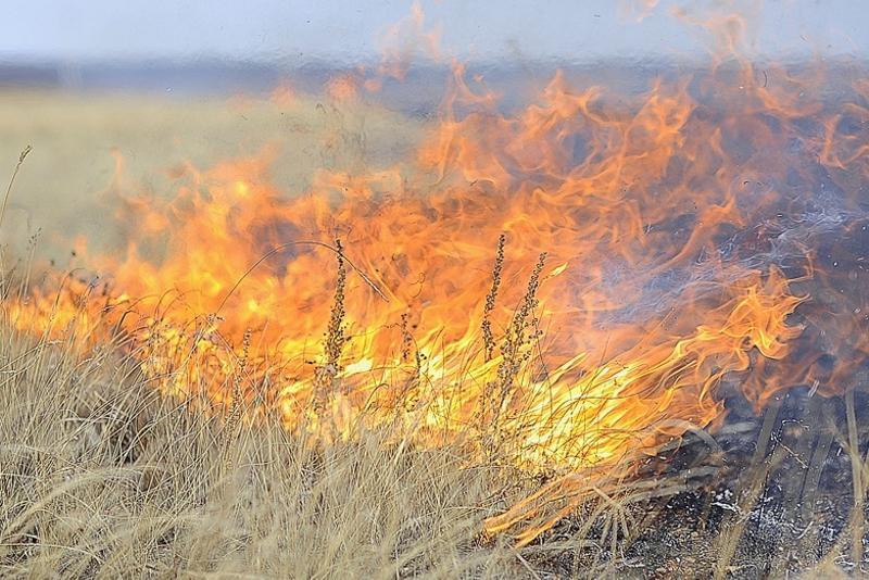 Владимир Беккер: В южных областях степные пожары переходят на посевы