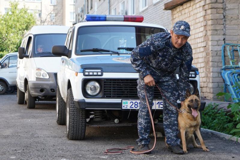 Более 500 преступлений помогли раскрыть собаки в СКО